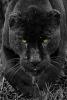 c503b81abdee6b984f5e7cee70b8af62--colin-odonoghue-black-panthers